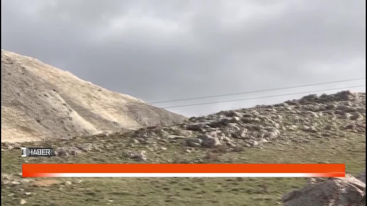 Dağ keçileri grup halinde görüntülendi