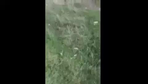 Kayseri'de köpeğe tecavüz eden kişi suç üstü yakalandı