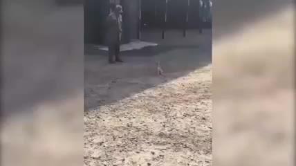 Komutanın Emriyle Asker Gibi Sürünen Köpek İzleyenleri Kahkahaya Boğdu